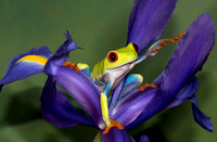 Frogs and Reptiles in Macro Photography